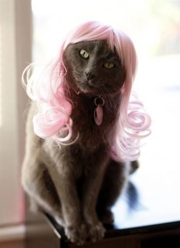 Nourrir le chat-funny cute kitty rappel Aimant Réfrigérateur Congélateur